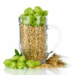 Glass of fresh green hops and barley, isolated on white — Stock Photo #32685417