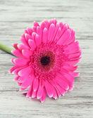 Beautiful pink gerbera flower on wooden table — Stock Photo
