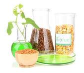 концептуальные фото био топлива. изолированные на белом фоне — Стоковое фото