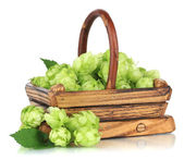Fresh green hops in wooden basket, isolated on white — Stock Photo