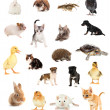 Collage of different cute animals — Stock Photo #32848199