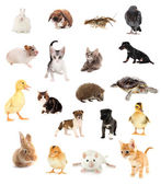 Collage of different cute animals — Stok fotoğraf