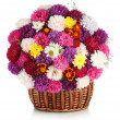 Beautiful bouquet of chrysanthemums in wicker basket isolated on white — Stock Photo