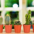 Collection of cactuses, on windowsill — Stock Photo #32937143