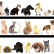 Collage of different cute animals — Stock Photo #32957623