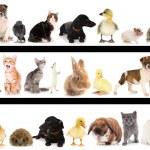 koláž různých roztomilých zvířat — Stock fotografie
