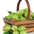 Stock Photo: Fresh green hops in wooden basket, isolated on white