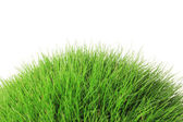 Beautiful green grass, isolated on white — Stock Photo