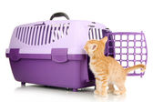 Cute little red kitten with travel plastic cage isolated on white — Stock Photo