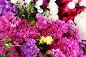 Beautiful summer flowers close-up background — Stock Photo