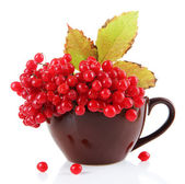 Red berries of viburnum in cup, isolated on white — Stock Photo
