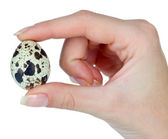 Quail eggs in hand isolated on white — Stock Photo