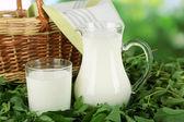 Dzban i szklankę mleka na trawie na tle przyrody — Zdjęcie stockowe