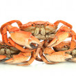 Boiled crabs isolated on white — Stock Photo #33083985