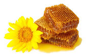 Sweet honeycombs with honey and sunflower, isolated on white — Stock Photo