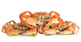 Boiled crabs isolated on white — Stock Photo