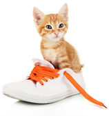 Cute little red kitten in shoes isolated on white — Stock Photo