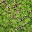 Green moss close up — Stock Photo