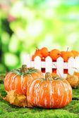 Abóboras pequenas e tangerinas em fundo de natureza — Foto Stock