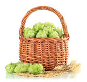 Fresh green hops in wooden basket and barley, isolated on white — Stock Photo
