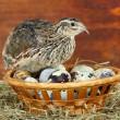 Young quail with eggs on straw on wooden background — Stock Photo #33180425