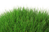 Beautiful green grass, isolated on white — Stockfoto