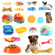 Collage of pets and different stuff for them — Stock Photo