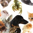 Collage of different cute animals — Stock Photo #33314163