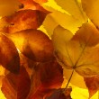 Bright autumn leaves, close up — Stock Photo #33314279