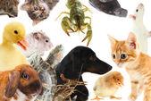 不同的可爱动物的抽象拼贴画 — 图库照片