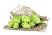 Fresh green hops, isolated on white — Stock Photo