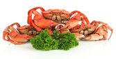 Kokta krabbor isolerad på vit — Stockfoto