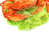 Boiled crab isolated on white — Stock Photo
