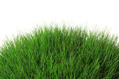 Beautiful green grass, isolated on white — Stock fotografie
