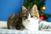 Kočka na pléd na vánoční stromeček pozadí — Stock fotografie