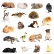 Collage of different cute animals — Stock Photo