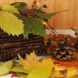 Beautiful autumn leaves with bumps and basket on table on wooden background — Foto Stock #33456423