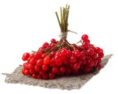Red berries of viburnum isolated on white — Stock Photo