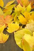 Heldere herfst bladeren op houten tafel — Stockfoto