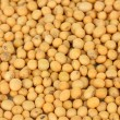 Soy beans close-up — Stock Photo
