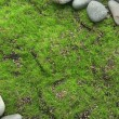 Grey stones, on grass background — Foto de Stock