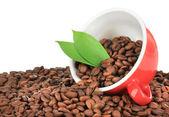 白い背景の上のカップのコーヒー豆 — ストック写真