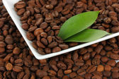 Coffee beans on plate close-up — Stock Photo