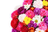 Beautiful bouquet of chrysanthemums on white background — Stock Photo