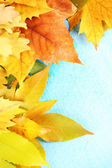 Bright autumn leafs on blue wooden table — Stock Photo