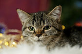 Cat with Christmas garland close-up — Stock Photo
