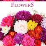 Beautiful bouquet of chrysanthemums close up — Stock Photo #33731725