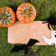 Old paper with Halloween decorations on green moss background — Stock Photo #33732945