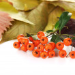 Beautiful autumn leaves with berries isolated on white — Stock Photo #33733027