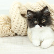 Little cute kitten with towel on floor — Stock Photo